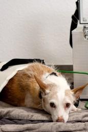 Austesten Bioresonanz Haustier