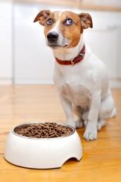 Allergie Futter Unverträglichkeit Haustiere