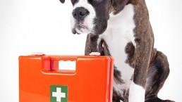 Erste Hilfe Kurs für Tierbesitzer